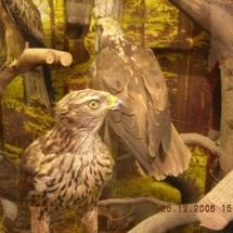 ornithologie_6650