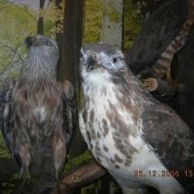 ornithologie_6652