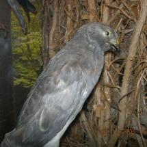ornithologie_6653