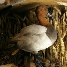 ornithologie_6654
