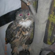 ornithologie_6657