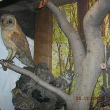 ornithologie_6658