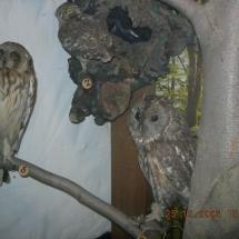 ornithologie_6659