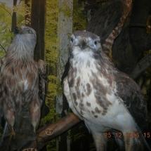 ornithologie_6660