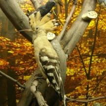 ornithologie_6663