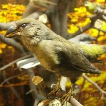 ornithologie_6664